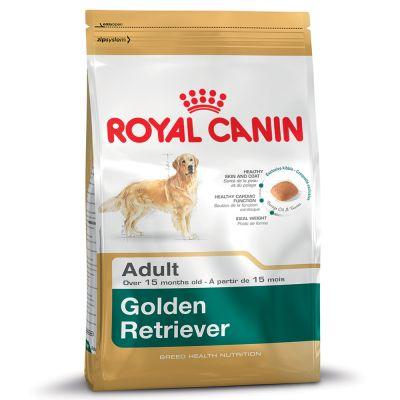 Golden Retriever สุนัขพันธุ์โกลเด้น รีทรีฟเวอร์