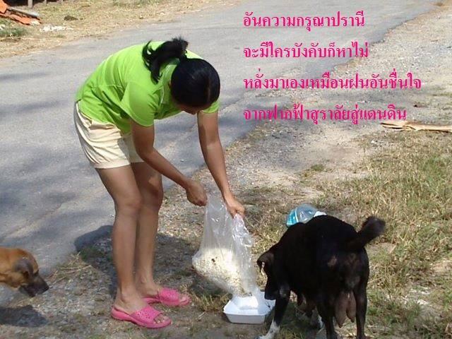 บัญชีบุญนำทางเพื่อช่วยเหลือสัตว์ยากไร้ และงานบุญต่าง ๆ หาบ้านให้หมาแมว