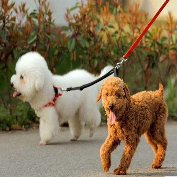 สายจูง 2 ทางเพื่อการจูงสุนัข 2 ตัว