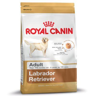 Labrador Retriever สุนัขพันธุ์ลาบราดอร์ รีทรีฟเวอร์