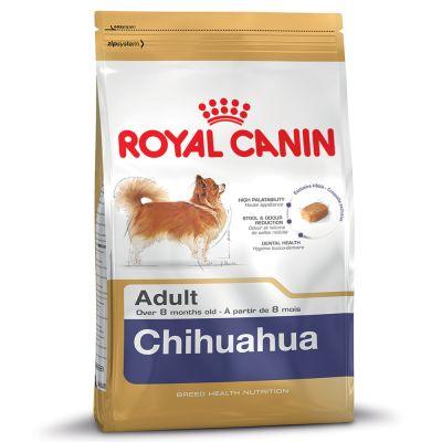 Chihuahua สุนัขพันธ์ชิวาวา
