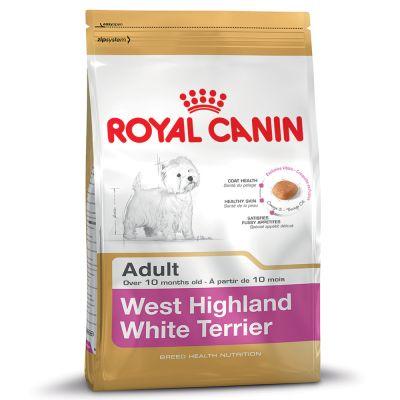 West Highland White Terrier Adult สุนัขโตพันธุ์แจ็ค รัสเซลล์ 1.5 กก.