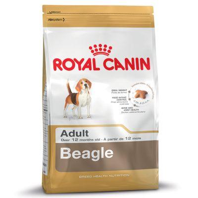 Beagle Adult สุนัขโตพันธุ์บีเกิ้ล