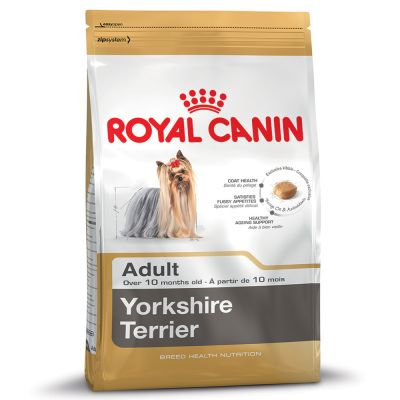 ยอร์คไซร์ เทอร์เรีย Yorkshire Terrier