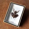 ++ แมลงสต๊าฟ กล่องแมลง ตั๊กแตนใบไม้แห้ง Deroplatys lobata ++