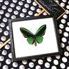 ++ ผีเสื้อสต๊าฟ กรอบผีเสื้อปีกนกไพรแอม ตัวผู้ Priam's Birdwing สีเขียวสวยสด ++