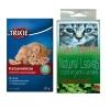 หญ้าแมวเคลิ้ม-Catnip หรือ Royal Pet