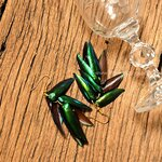 ++ ต่างหูปีกแมลงทับ สีเขียวมรกตสวยงาม (อะไหล่สีทอง) ++