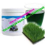 คลอโรฟิลล์ พาวเดอร์ (Chlorophyll Powder Unicity)
