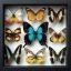 ++ ผีเสื้อสต๊าฟ กล่องผีเสื้อเซ็ทลอย 9 ชนิด ไฮไลท์ผีเสื้อหางติ่งสีเขียวน้ำทะเล Papilio lorquinianus // กล่องสีดำ ++ thumbnail 2