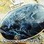 ▽ปีเตอร์ไซต์สีน้ำเงิน (ฺBlue Pietersite) จี้เงินแท้ 925 (3.6g) thumbnail 4