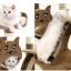 คอนโดแมว TRE11 thumbnail 2