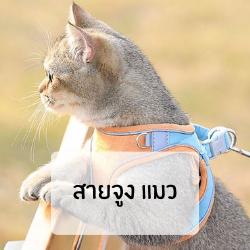 สายจูง แมว