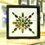 ++ Beetle Art แมลงสต๊าฟรูปแบบศิลปะในกล่องไม้พรีเมี่ยม ++